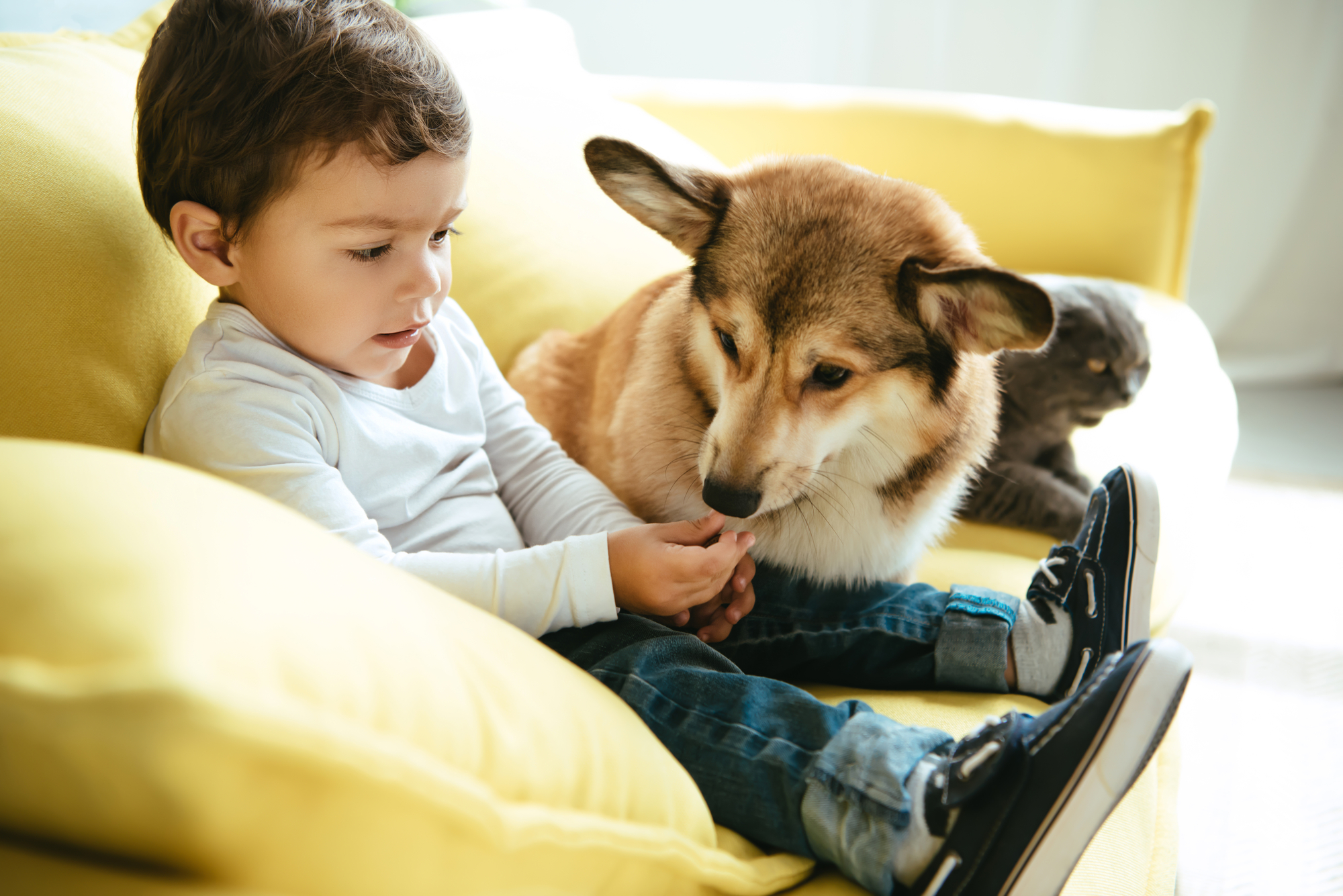 What Pet Screening Is And Why You Need It